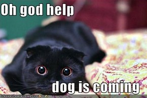 Oh god help  dog is coming