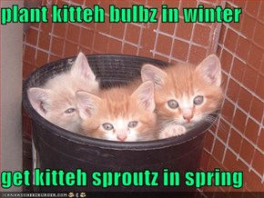 plant kitteh bulbz in winter  get kitteh sproutz in spring