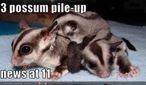 3 possum pile-up  news at 11