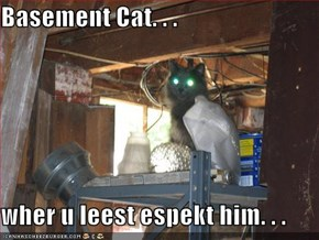 Basement Cat. . .  wher u leest espekt him. . .