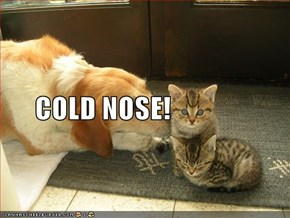 COLD NOSE!