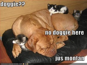 doggie?? no doggie here jus montan