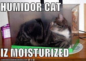 HUMIDOR CAT  IZ MOISTURIZED
