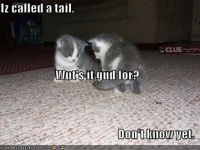 Iz called a tail. Wut's it gud for? Don't know yet.