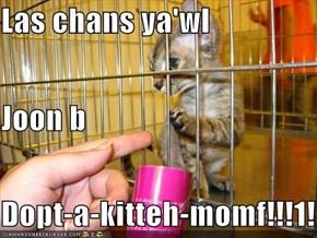 Las chans ya'wl Joon b Dopt-a-kitteh-momf!!!1!