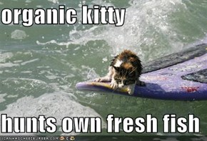 organic kitty  hunts own fresh fish