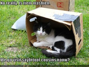 No really. Is tiem mashien.  We go visit saybrtoof cousins naow?