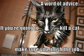 A word of advice... If you're going to                    kill a cat... make sure you finish the job.