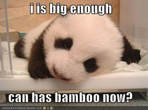 i is big enough  can has bamboo now?