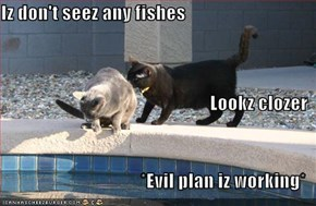 Iz don't seez any fishes Lookz clozer *Evil plan iz working*