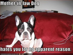 Mother-in-law Dog  hates you for no apparent reason.