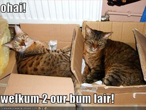 ohai!  welkum 2 our bum lair!