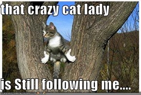 that crazy cat lady  is Still following me....