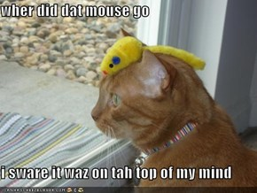 wher did dat mouse go  i sware it waz on tah top of my mind