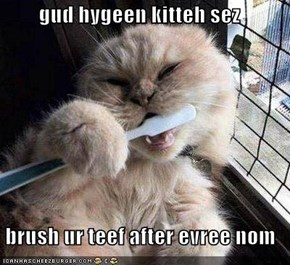 gud hygeen kitteh sez  brush ur teef after evree nom