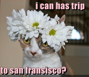i can has trip  to san fransisco?