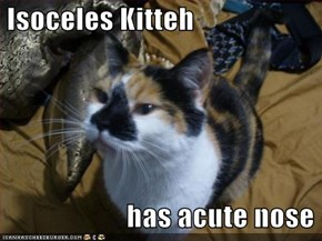 Isoceles Kitteh                          has acute nose