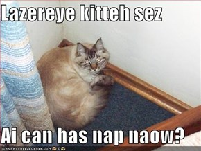 Lazereye kitteh sez  Ai can has nap naow?