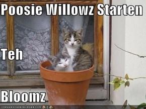 Poosie Willowz Starten Teh Bloomz