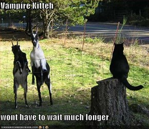 Vampire Kitteh  wont have to wait much longer
