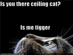 Is you there ceiling cat? Is me tigger