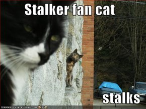 Stalker fan cat  stalks