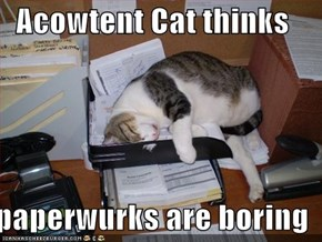 Acowtent Cat thinks  paperwurks are boring