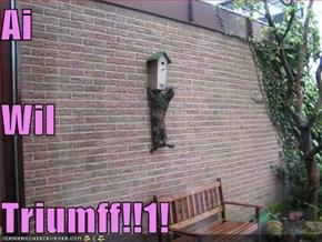 Ai Wil Triumff!!1!