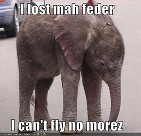 I lost mah feder  I can't fly no morez
