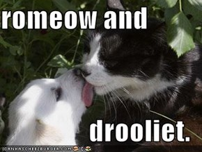 romeow and  drooliet.