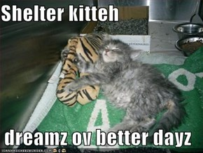 Shelter kitteh  dreamz ov better dayz