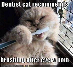Dentist cat recommends  brushing after every nom