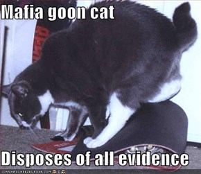 Mafia goon cat  Disposes of all evidence