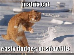 matrix cat  easly dodges ur snowbllz