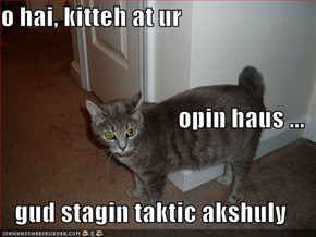 o hai, kitteh at ur opin haus ... gud stagin taktic akshuly
