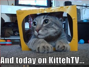 And today on KittehTV...