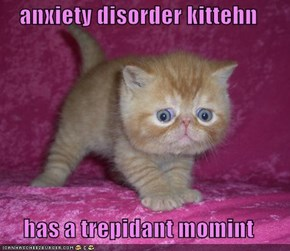 anxiety disorder kittehn  has a trepidant momint