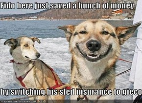 Fido here just saved a bunch of money  by switching his sled insurance to gieco