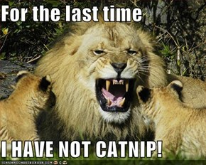 For the last time  I HAVE NOT CATNIP!
