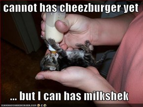 I cannot has cheezburger yet   ... but I can has milkshek