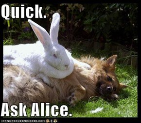 Quick.  Ask Alice.