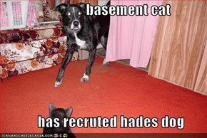 basement cat               has recruted hades dog