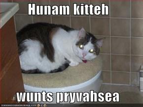 Hunam kitteh  wunts pryvahsea