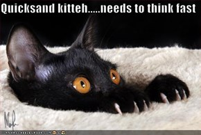 Quicksand kitteh.....needs to think fast