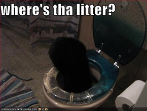 where's tha litter?