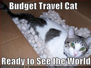 Budget Travel Cat  Is Ready to See the World!