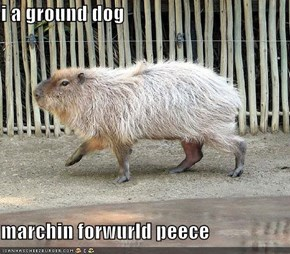 i a ground dog  marchin forwurld peece