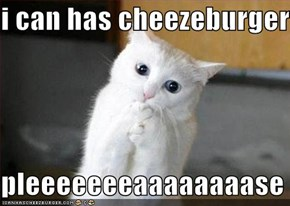 i can has cheezeburger  pleeeeeeeaaaaaaaase
