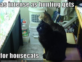 as intense as hunting gets  for housecats