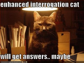 enhanced interrogation cat  will get answers.. maybe